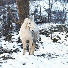 horse with winter coat