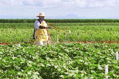 Ameaça à humanidade | #Biotecnologia, #Brasil, #Câmara, #Congresso, #Genética, #GMO, #Modificado, #Monsanto, #OGM, #Transgênico