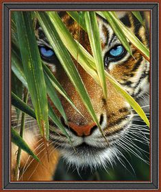 "Artworks VII - Tiger Eyes - 36"" x 44"" PANEL - DIGITAL PRINT -  Quilt Fabrics from www.eQuilter.com"