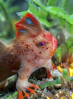 HandFish