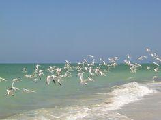 Captiva Island, Florida is a small tropical island four miles off the south gulf…