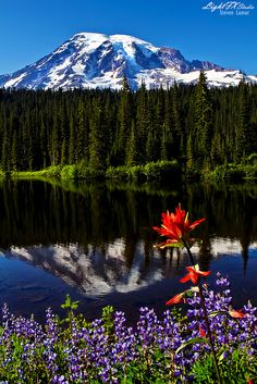 Reflection Lake and Mount Rainier; photo by Steven Lamar