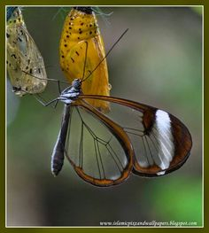 Beautiful creation of Allah butterfly pictures | Islam Wallpaper