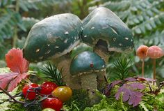 Stropharia Aeruginosa | Flickr - Photo Sharing!