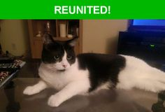 Great news! Happy to report that Scout has been reunited and is now home safe and sound! :)