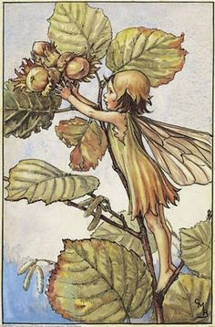 """The """"Hazel Nut Fairy"""" by Cicely Mary Barker from the Flower Fairies of the Autumn"""