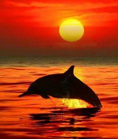 Zonsondergang met dolfijn