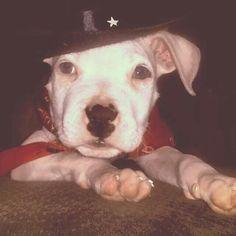 Zeke waiting to be adopted