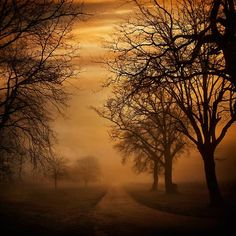 red tree photography.  Light fog.  Elegant trees in sparse winter garb.