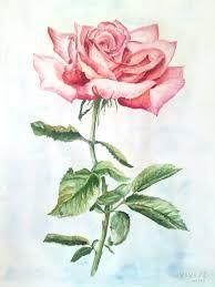 Картинки по запросу белые розы акварель