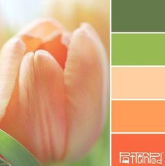 a lovely leaf green, peach & coral #color palette