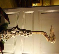 Du bois flotté associé à de l'écorce de chêne liège, des vis et voilà le travail.... ce drôle d'oiseau au look de héron peut rejoindre votre jardin, avec un peu de chance il servira peut être d'épouvantail !! Repurposed, Drift Wood, Birds