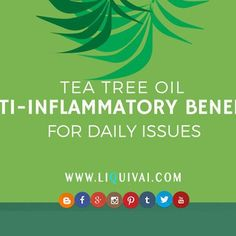Take a look at our infographic: on Tea Tree Oil and it's Anti-Inflammatory Benefits for Daily Issues... We hate razor bumps, rashes and burns, or even skin problems because of working out at the gym.. Take a look to see what tea tree oil can do for you.  http://liquivai.com/tea-tree-oil-anti-inflammatory-benefits-infographic/  #skincare #koreanskincare #luxuryskincare #infographic #kbeauty #seoul #liquivai #health #wellness #fitness #follow #like