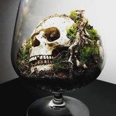 Spécial Halloween : The Skull-Terrarium