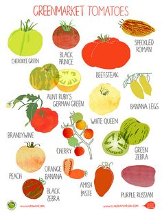 Great tomato poster showing different varieties. There's nothing like the taste of a home grown tomato at room temperature. Tomato sammich here I come. Varieties Of Tomatoes, Green Banana, Peach Orange, Beef Steak, Kitchen Art, Nice Kitchen, Kitchen Prints, Food Illustrations, Vegetable Gardening