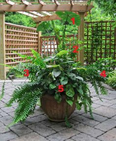 2012 Container Design Challenge Results: Fantastic Foliage - Fine Gardening