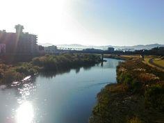 今朝の足羽川