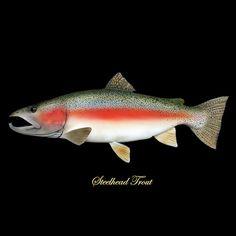 Steelhead Trout Fish Art Fishing Lodge Cabin Decor