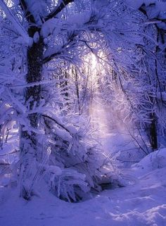 Winter scene in violets and pinks.