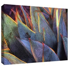 Found it at Wayfair - 'Sun Succulent' by Dean Uhlinger Photographic Print on Wrapped Canvas