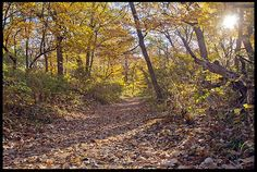 "Visual #BibleVerseoftheDay: Numbers 6:24-26 and Leaf Covered Path, Fontenelle Forest, Bellevue, Nebraska.  ""The LORD make His face shine on you…"" CLICK THE PHOTO for the complete passage. http://visualverse.thecreationspeaks.com/gods-face-shine/"