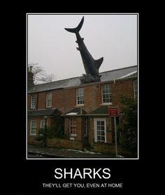 damn persistent sharks
