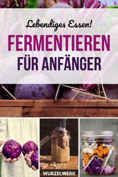 The ultimate guide to fermentation with anti-mold checklist! - root system benefits recipes recipes how to make smoothie smoothie recipes Kombucha, Kefir Benefits, Kefir Recipes, Water Kefir, Red Cabbage, Sauerkraut, Fermented Foods, Saveur, Smoothie Recipes