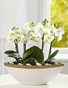 Orchid Boat Flowers. M& S - the perfect centre piece on a console table