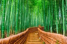 Bamboo forest nature Japan wall art impresión por Chachaprints