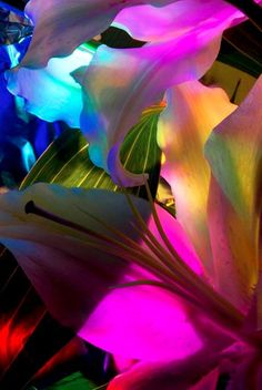 Abstract Flower Photography   Falling Pink  4x6 print by ArtChroma, $5.00