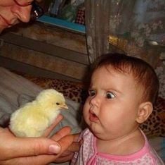 We Love Kids And Everything About Them Pics). Funny photos of kids just being kids. Photos of kids that will make your day. Funny Baby Faces, Cute Funny Babies, Funny Baby Pictures, Funny Kids, Funny Cute, Funny Photos, Baby Photos, Cute Kids, Hilarious