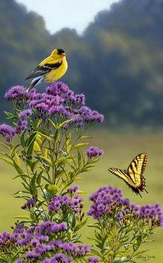 Goldfinch on Ironweed Pretty Birds, Love Birds, Beautiful Birds, Beautiful World, Especie Animal, Kinds Of Birds, Goldfinch, Backyard Birds, Bird Pictures