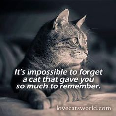 It's impossible to forget a cat that gave you so much to remember...
