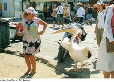 Fine feathers, Mykonos. Tips from a Greece traveler.