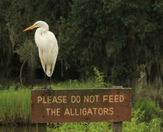 Sign located on Avery Island, Louisiana, home of the world famous Tabasco sauce and a great birding area (or alligatoring if you prefer).