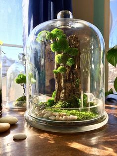 Hey! This is what you looking for gift to someone Best Choice - Preserved moss tree.