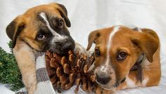 GOING ON NOW 12/12 TO 12/14 IMPORTANT EVENT! NY, NJ, CT COME TOGETHER FOR SUPER ADOPTION EVENT! DON'T MISS OUT! (PLEASE ADOPT RESPONSIBLY - RESEARCH THE RIGHT BREED FOR YOU AND YOUR LIFESTYLE.)  http://ny.bestfriends.org:80/events/local-events