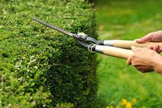 Fox Mowing is a reliable lawn mowing team in the Mount Martha region that provides quality garden maintenance services at a sensible price. Garden Services, Lawn, Hedges, Landscape, Lawn And Garden, Landscape Contractor, Garden Maintenance, Backyard Landscaping, Landscaping Work