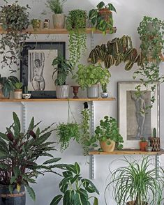 65 Beautiful Indoor Plants For Minimalist Home These trendy HomeDecor ideas would gain you amazing compliments. Check out our gallery for more ideas these are trendy this year. Room With Plants, House Plants Decor, Plant Decor, Indoor Garden, Garden Pots, Indoor Plants, Garden Home Office, Home And Garden, Decoration Plante