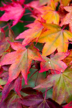 Copyright of Caroline Stocking Photography Autumn