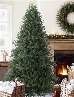 Saratoga Spruce Christmas Tree