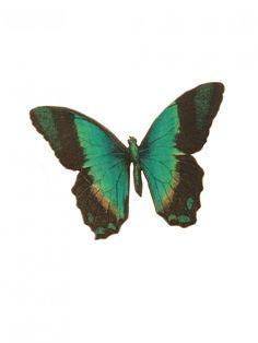Rock & Rose - Bertie Wooden Butterfly Brooch