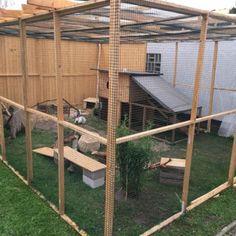 Rabbit Cages Outdoor, Outdoor Rabbit Hutch, Indoor Rabbit, Diy Guinea Pig Cage, Guinea Pigs, Rabbit Playground, Flemish Giant Rabbit, Rabbit Habitat, Rabbit Enclosure