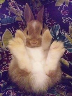 Bunny has fluffy feet....too cute!