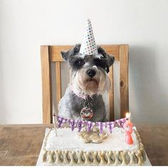 ¿Se acerca el cumple de tu mascota? ❤️🎉🐶 Sorprendela con una riquísima torta preparada exclusivamente para ella ✨🎂✨ @barkery.ar   Y si aún no tiene su #chapitapluv, podés regalársela para que siempre se encuentre identificada y protegida ❤️👉🏻 Conseguila en tiendapluv.com 📲  ¡A festejar! 🎉✨🐶🐱🎂🍪🎈🎁🎊  •  #happybirthday #birthday #pet #dog #cat instadogs @instacats #instabirthday #lovepet #lovedog #lovecat #perro #gato #cumpleaños #felizcumpleaños #happy #funny #fest… Love Pet, Funny, Happy Birthday, Dogs, Gatos, Dog Cat, Pets, Happy Brithday, Urari La Multi Ani