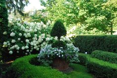 boxwood and hydrangea focal garden
