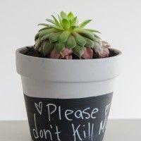 DIY & Home Posts - Chalk painted pots