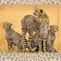 ! Servítky kusové Cheetah Family