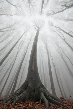 psydae:    Magic Forestby PhotoCosma