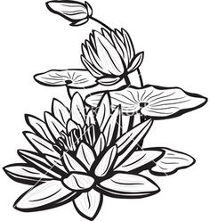 lotus sketch image titled draw a lotus flower step lotus easy Lotus Kunst, Lotus Art, Flower Line Drawings, Flower Sketches, Lilies Drawing, Mandalas Drawing, Water Lilies, Flower Tattoos, Water Lily Tattoos